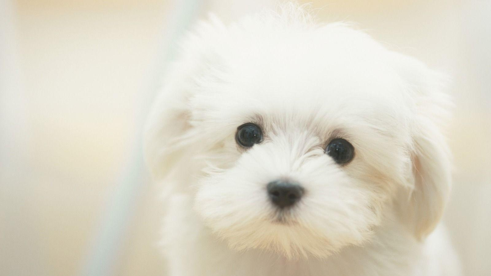 Collection of Cute Puppies Wallpapers on HDWallpapers