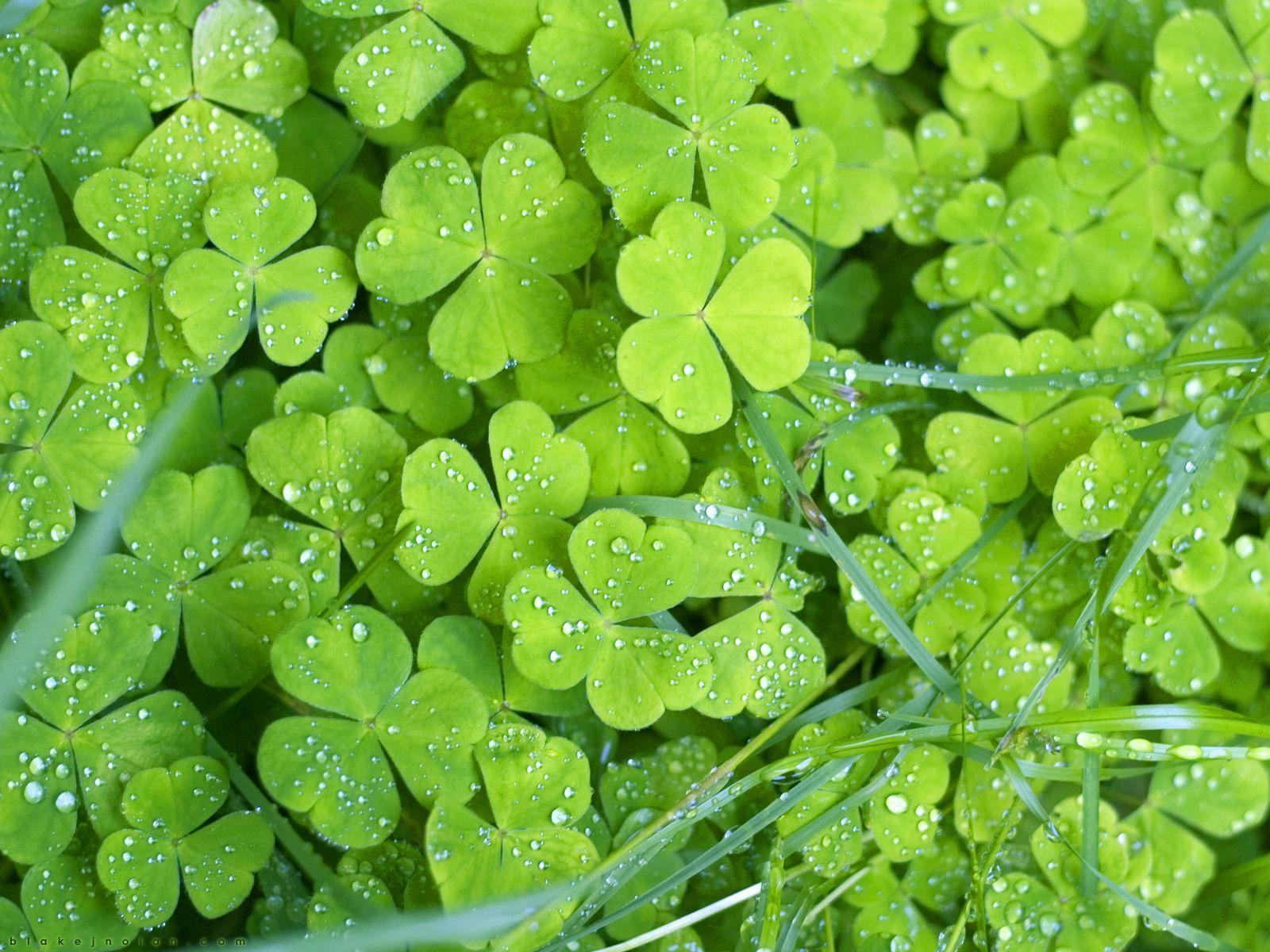 1000+ images about IRELAND: Backgrounds on Pinterest | Irish ...