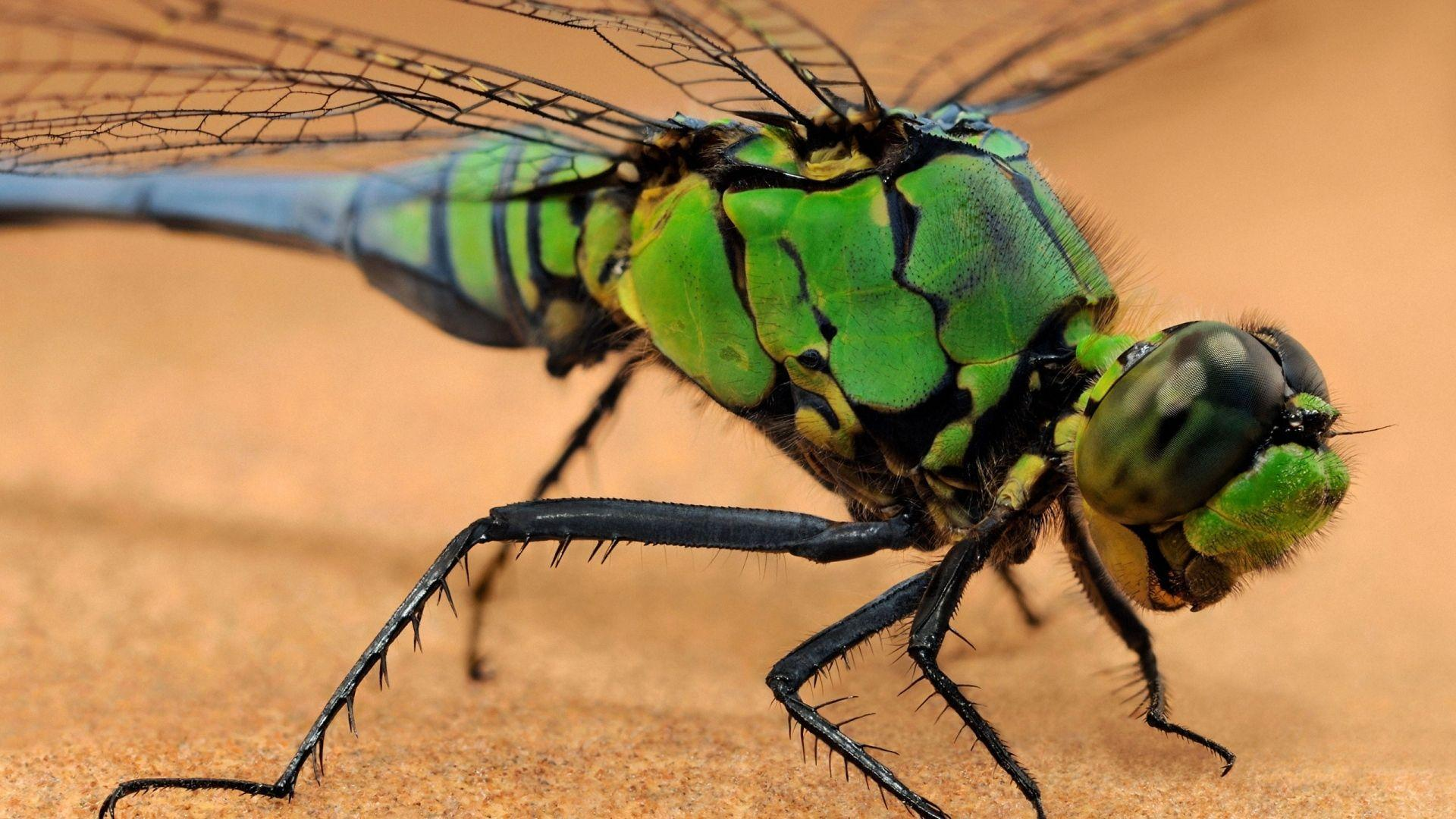 Insects Wallpapers - Wallpaper Cave