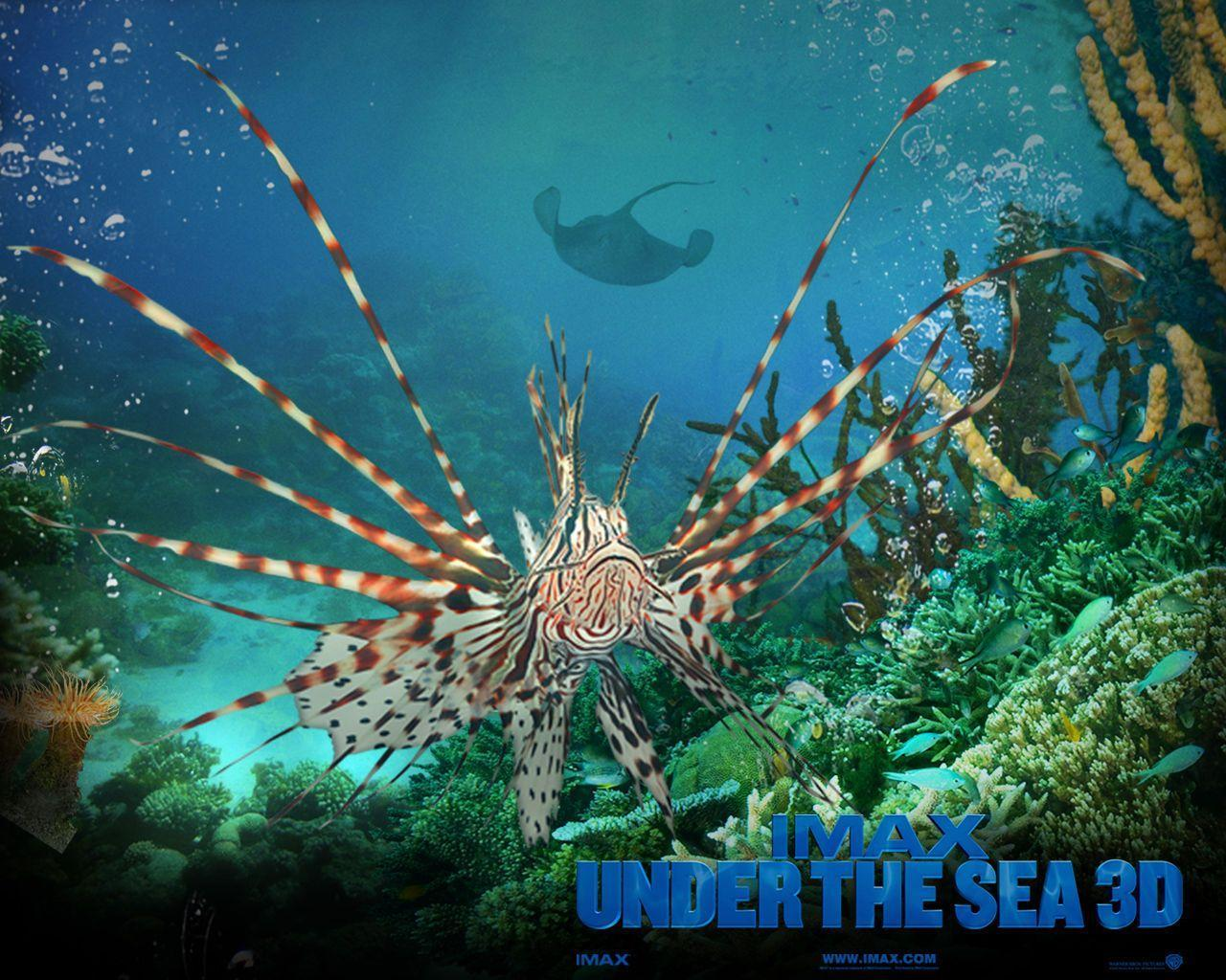 Under The Sea Wallpapers Wallpaper Cave