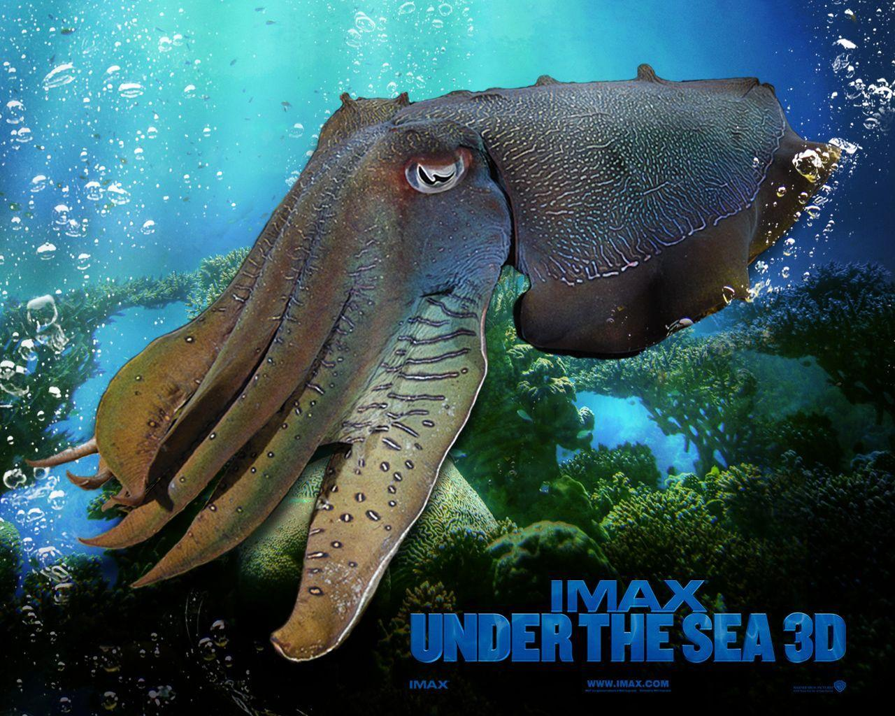 Under The Sea Wallpapers