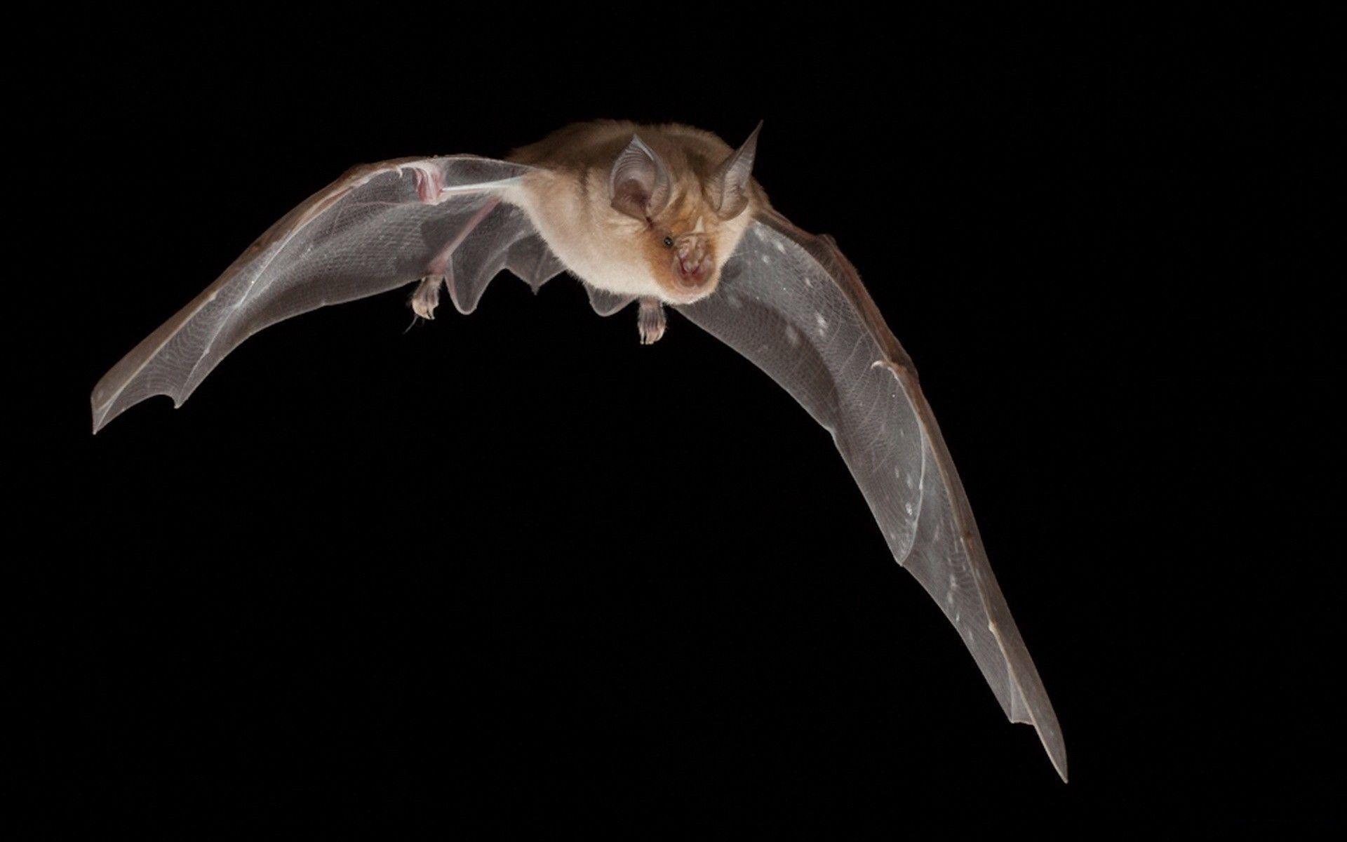 bat cave decal wallpaper - photo #33