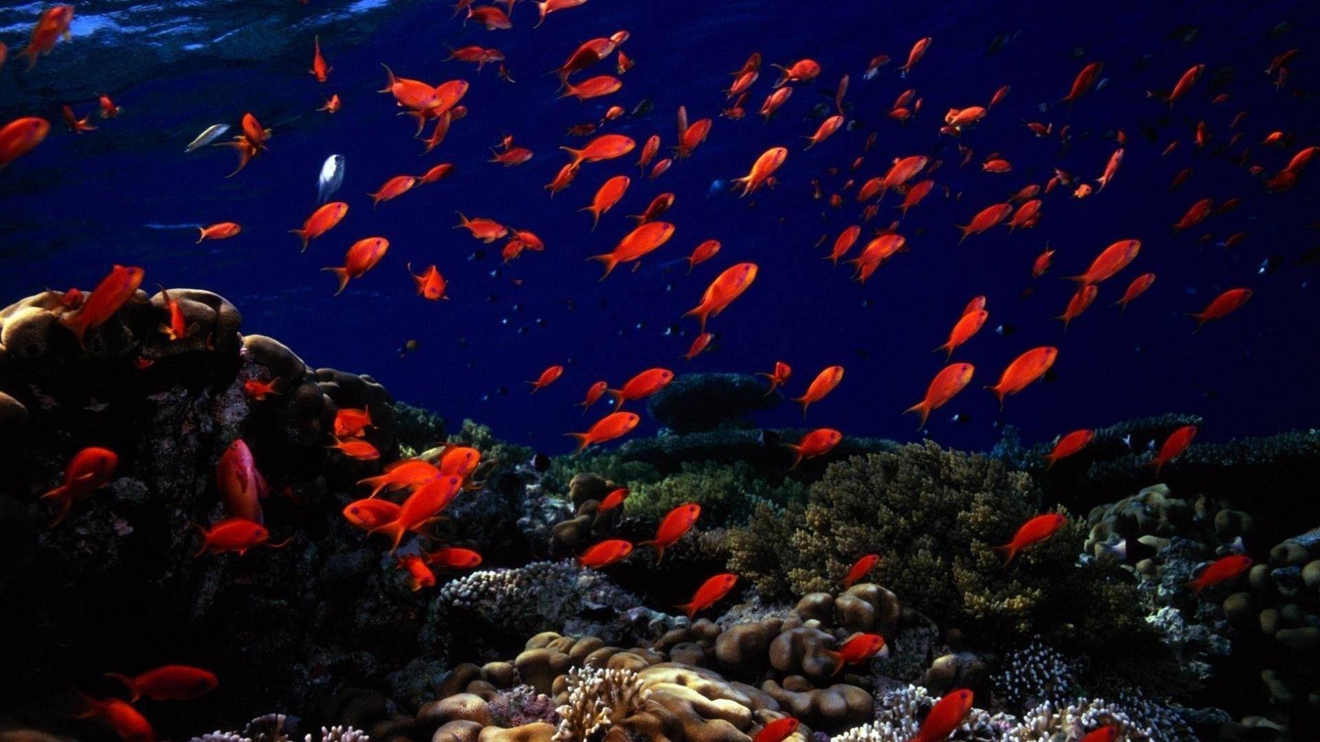 adenan hd wallpaper underwater - photo #20