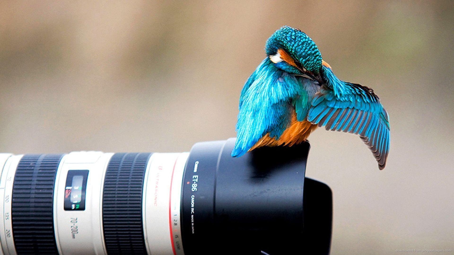 Download 1920x1080 Blue Bird On A Canon Lens Wallpaper