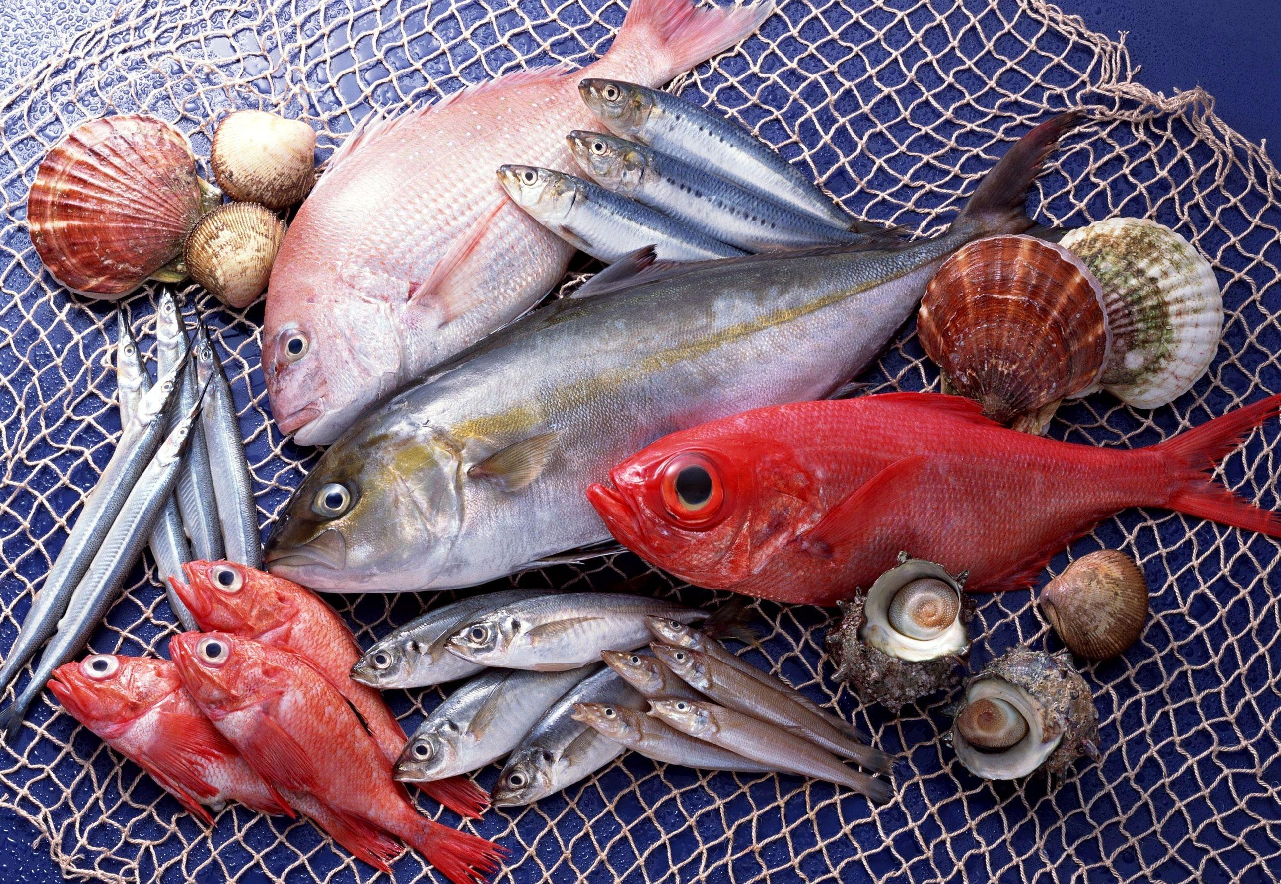 Download Wallpaper Fish, Seafood, variety HD Background