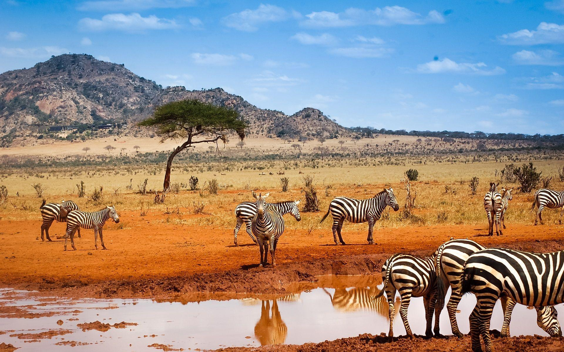 essay on african safari Visiting lake nakuru national park for a game safari is one of the best things you can do in kenya especially if you want to see 4 of the.