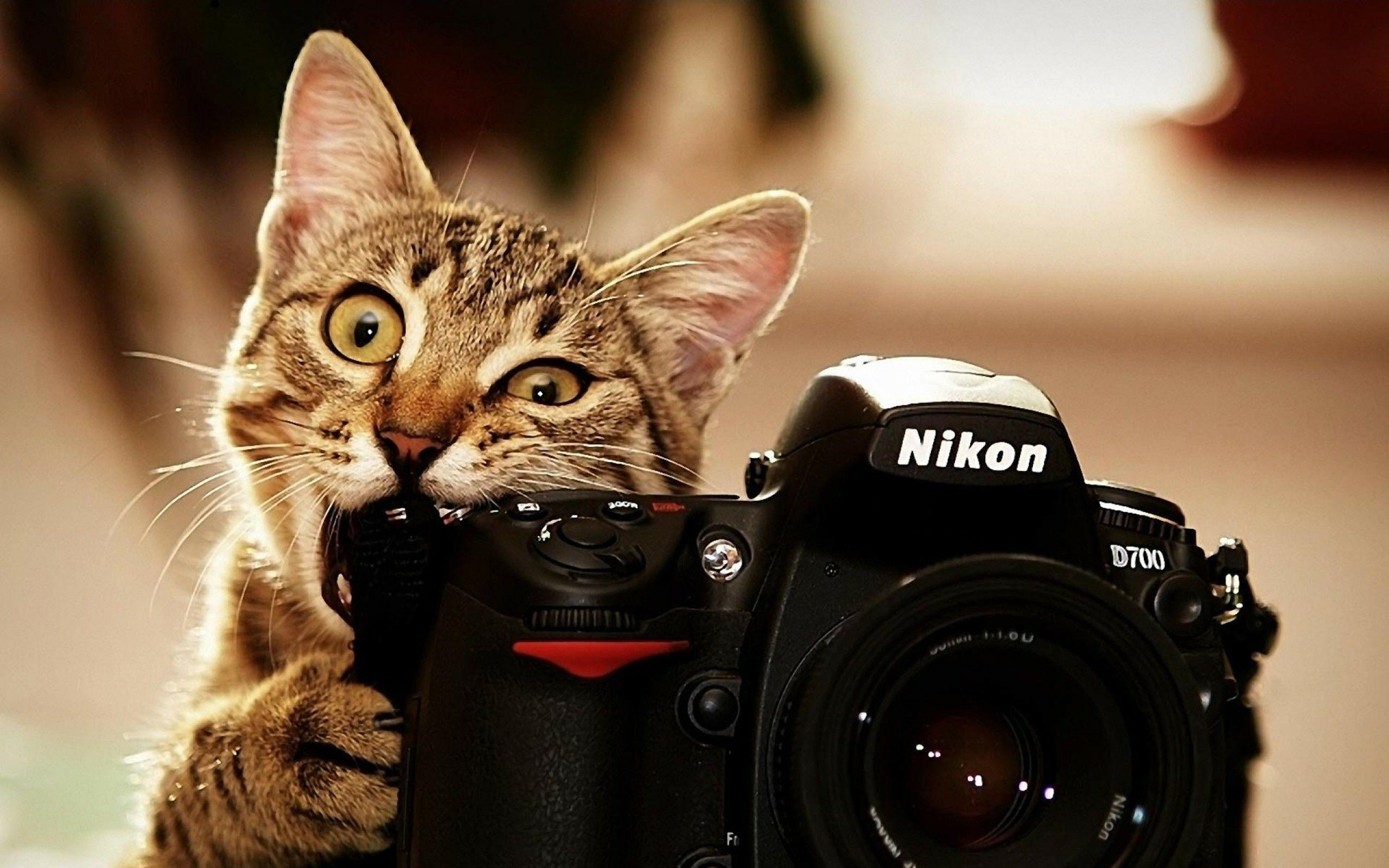 Photographer Wallpapers Wallpaper Cave