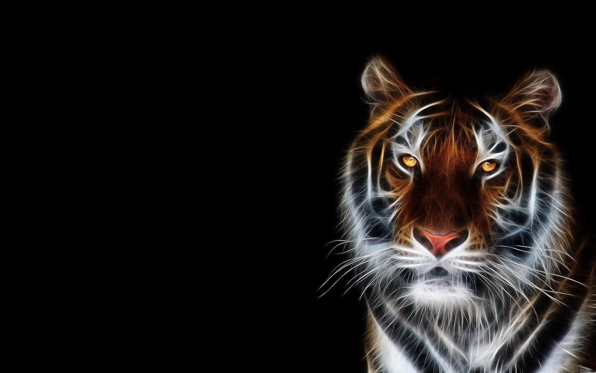 Black Tiger Wallpapers Wallpaper Cave