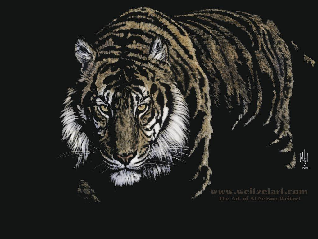 Black Tiger Wallpapers Wallpaper Cave
