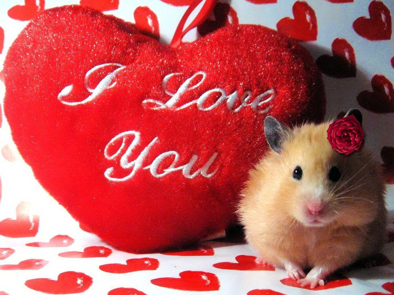 I Love You Images, Wallpapers, Photos