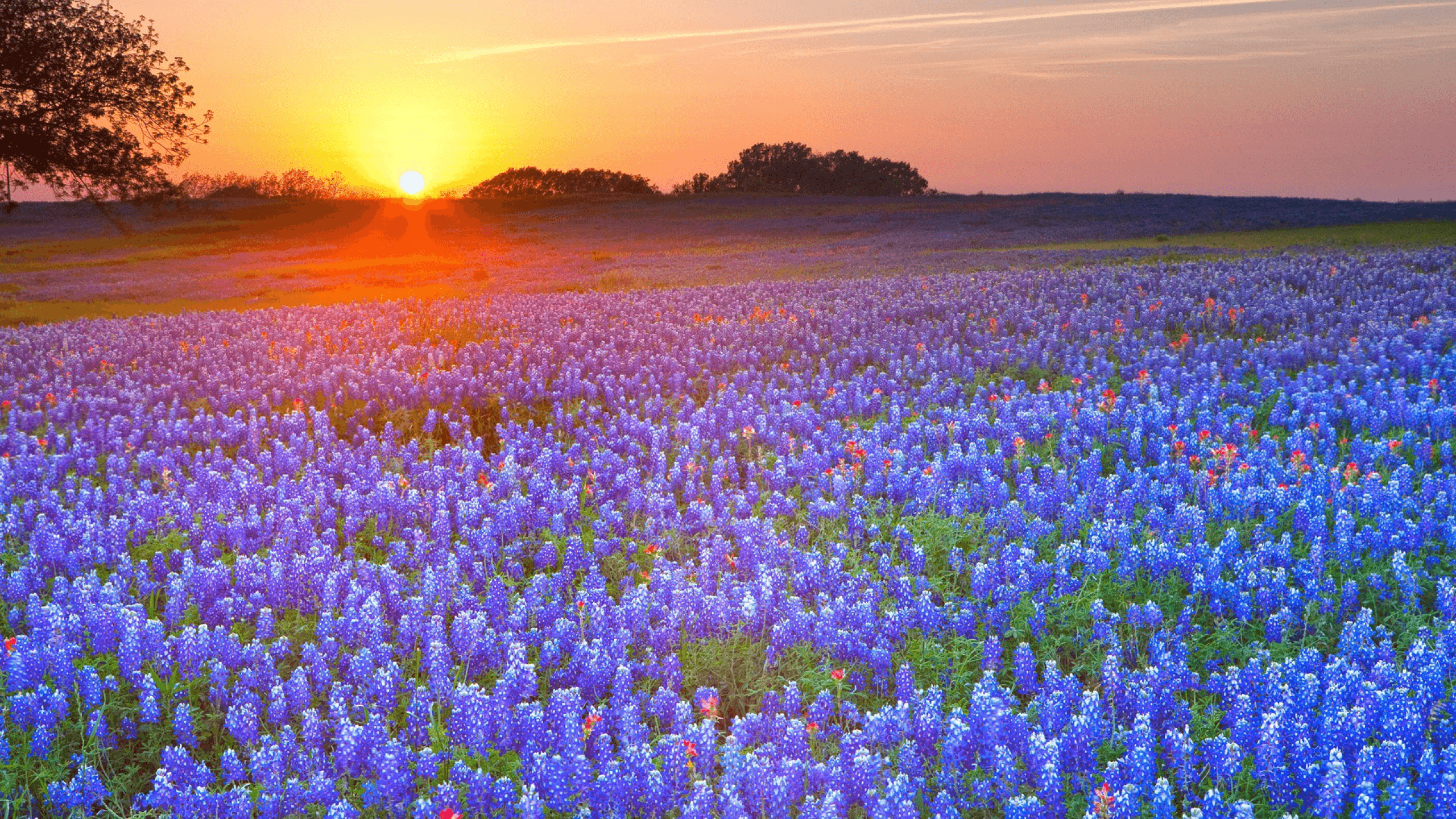 30+ HD Texas Wallpapers, Backgrounds, images | Design Trends .