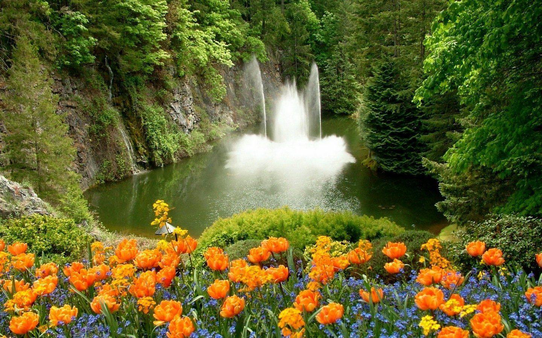 фото красивых цветов живых в природе собираются