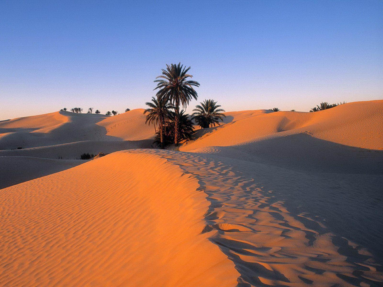 Sahara Desert and Palm Trees Wallpapers