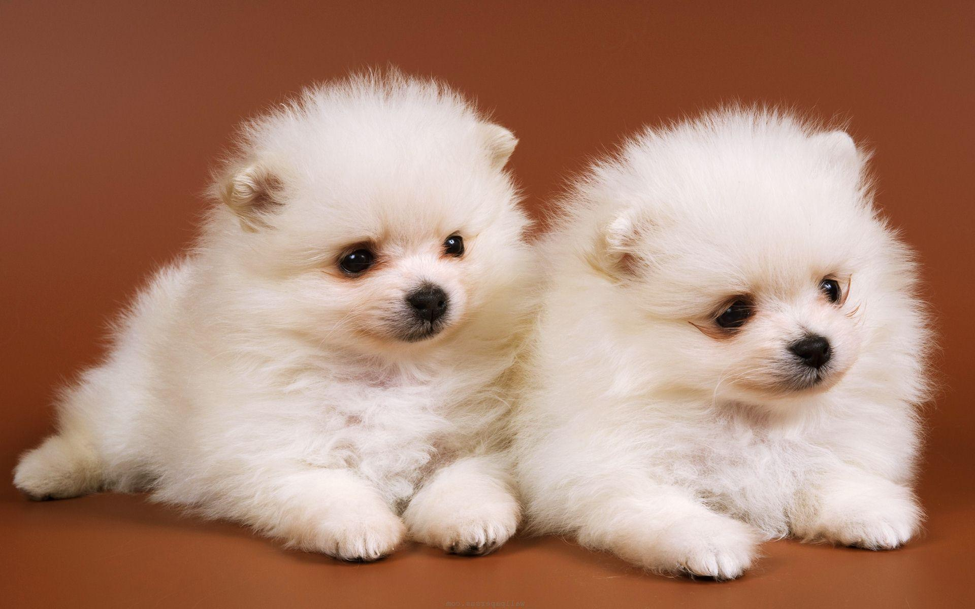 Baby Dogs Wallpapers