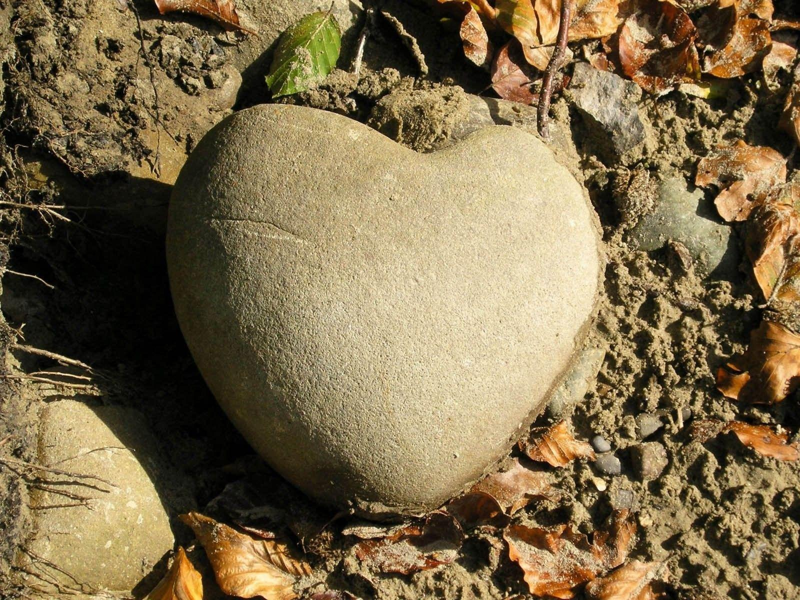 Misc: Heart Stone Natural Rock Stones Mud Nature Roots Leaves