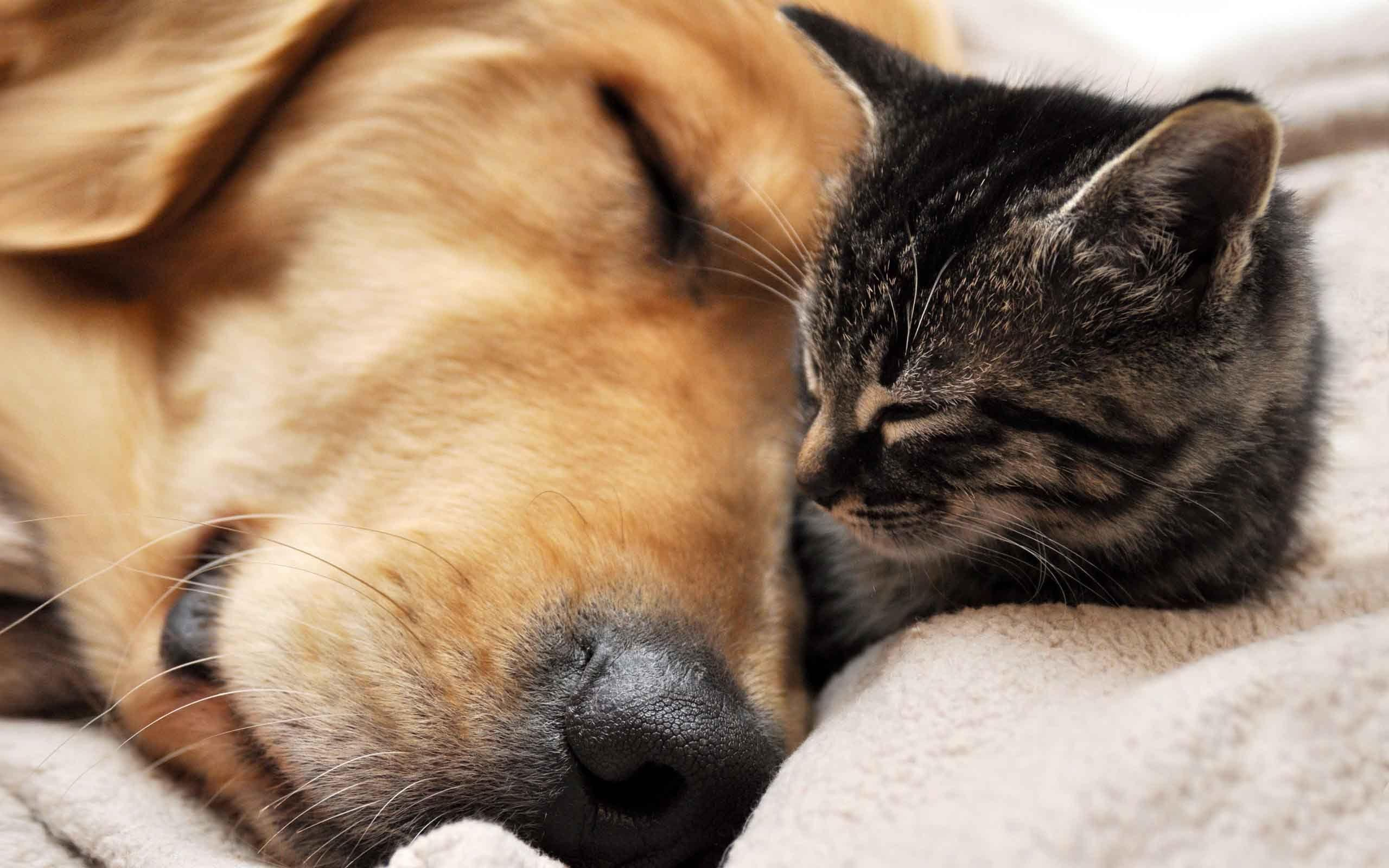 Cute Dog And Cat Wallpaper