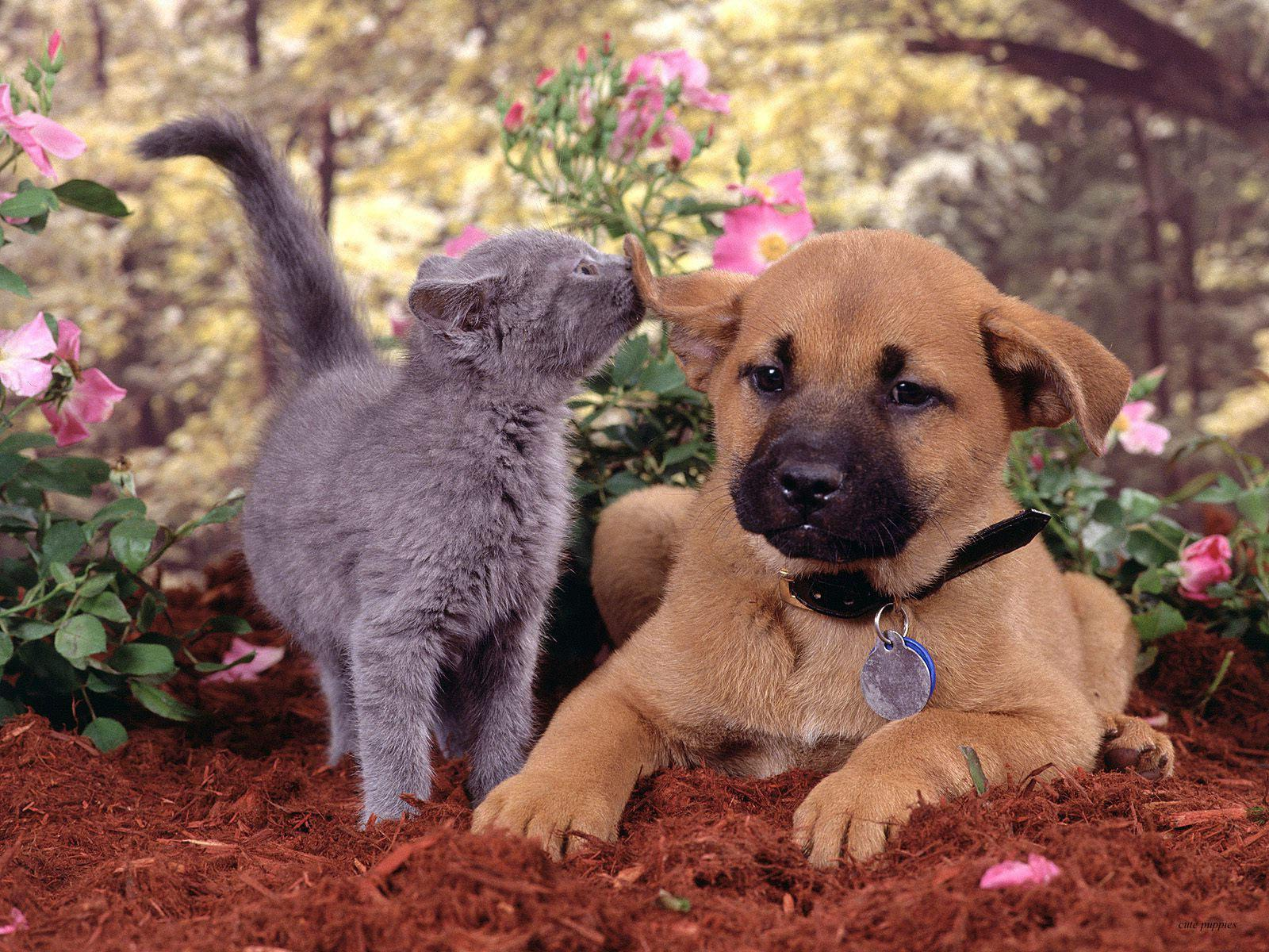 Dogs And Cats Wallpapers Wallpaper Cave