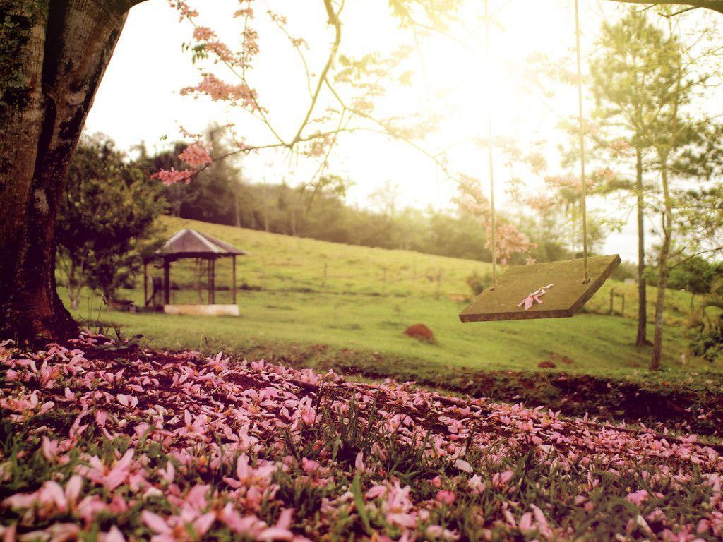 Springtime swing HD Wallpaper #10590