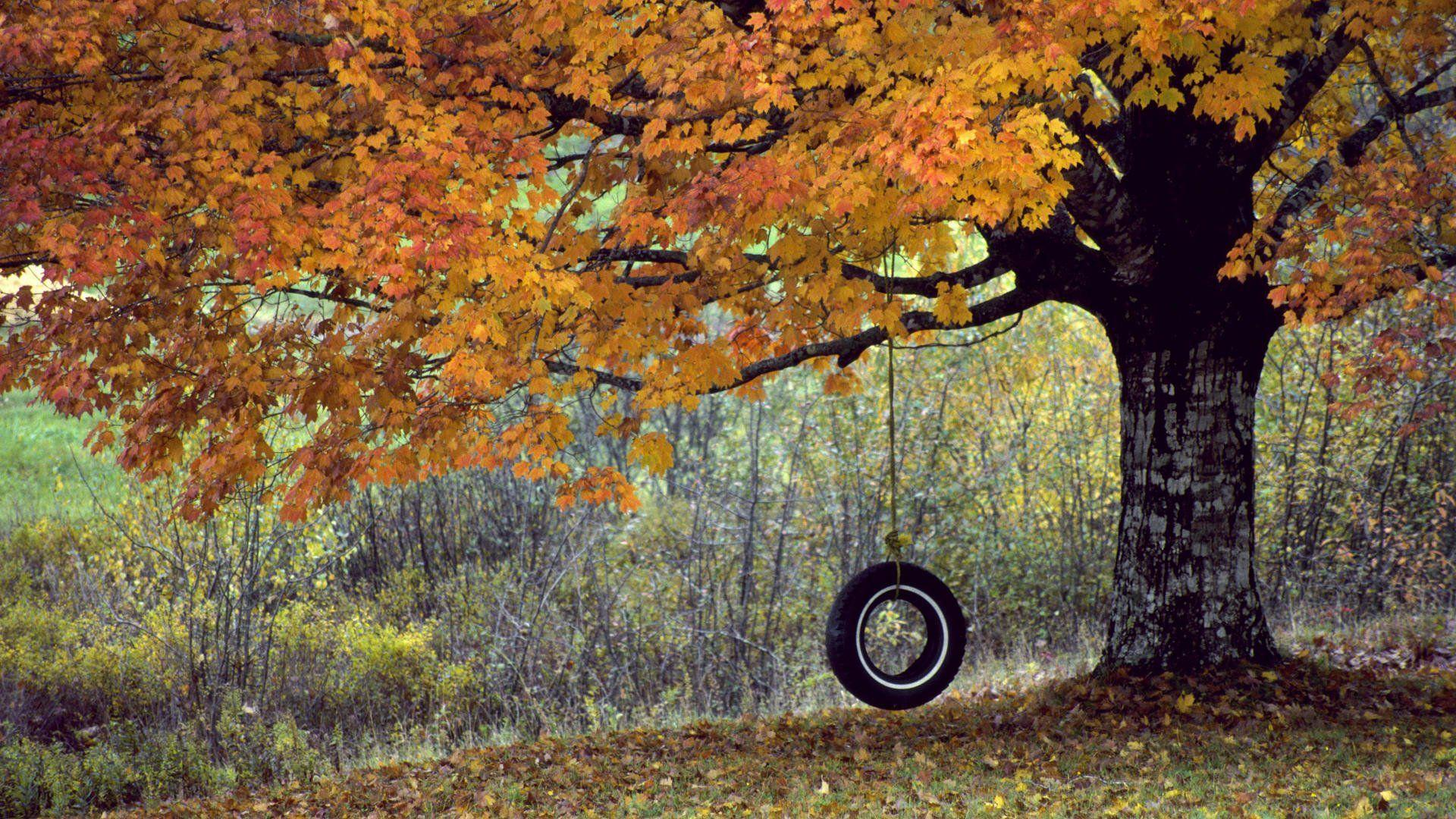 Tree With Tire Swing Wallpaper - WallDevil