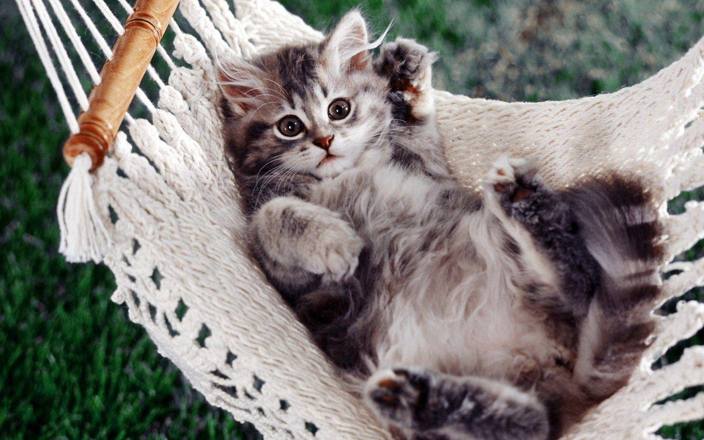 Kitten relaxing in the Swing widescreen wallpaper | Wide ...