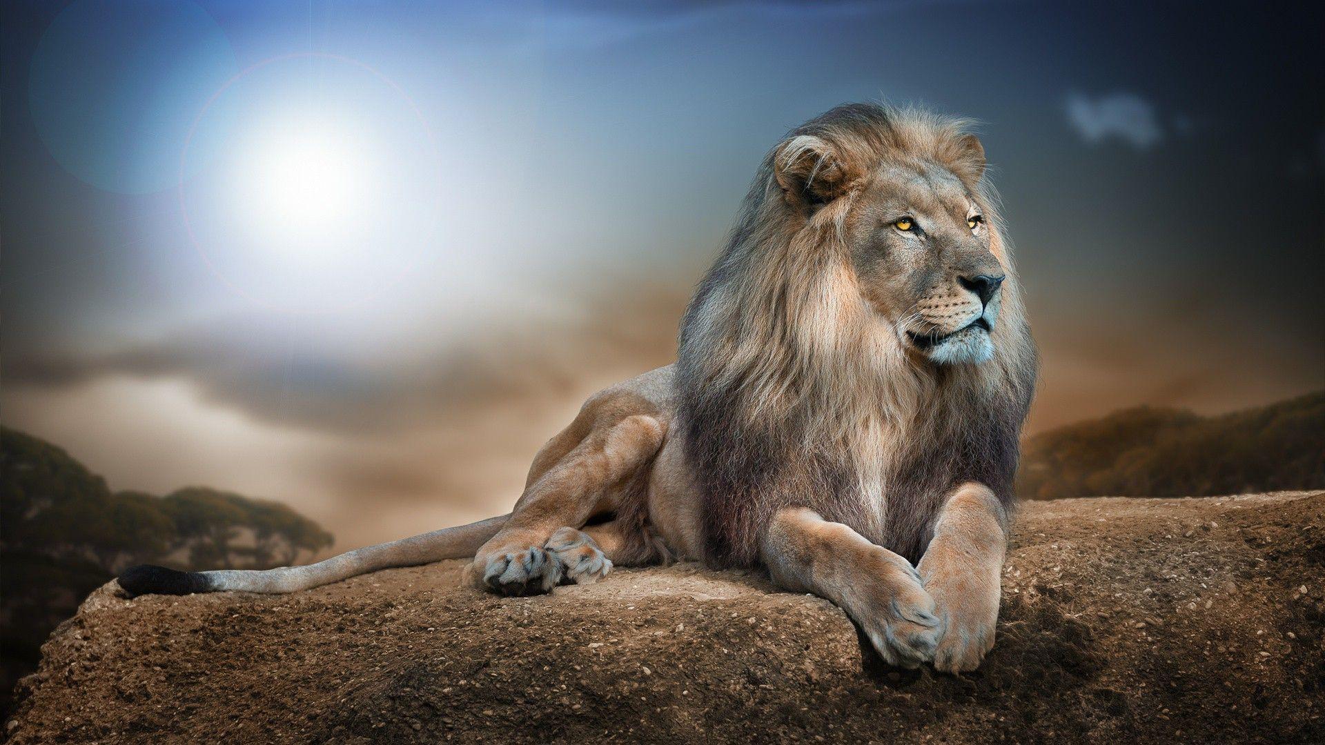 Wild Animal Lion HD Wallpaper | View HD | Download Wallpaper ...