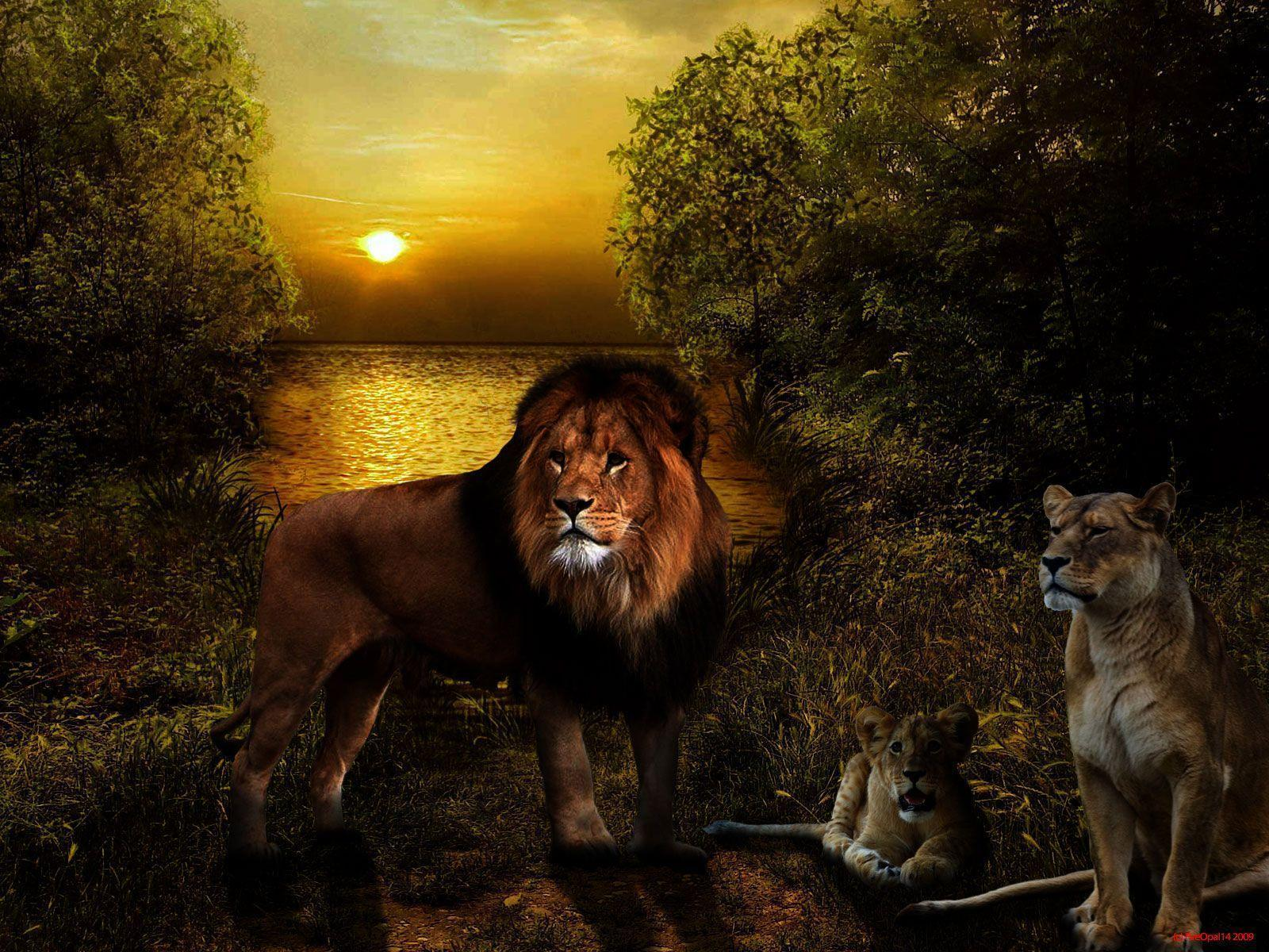 Lion Pictures Wallpaper, 42 Lion HDQ Images | NMgnCP PC Gallery