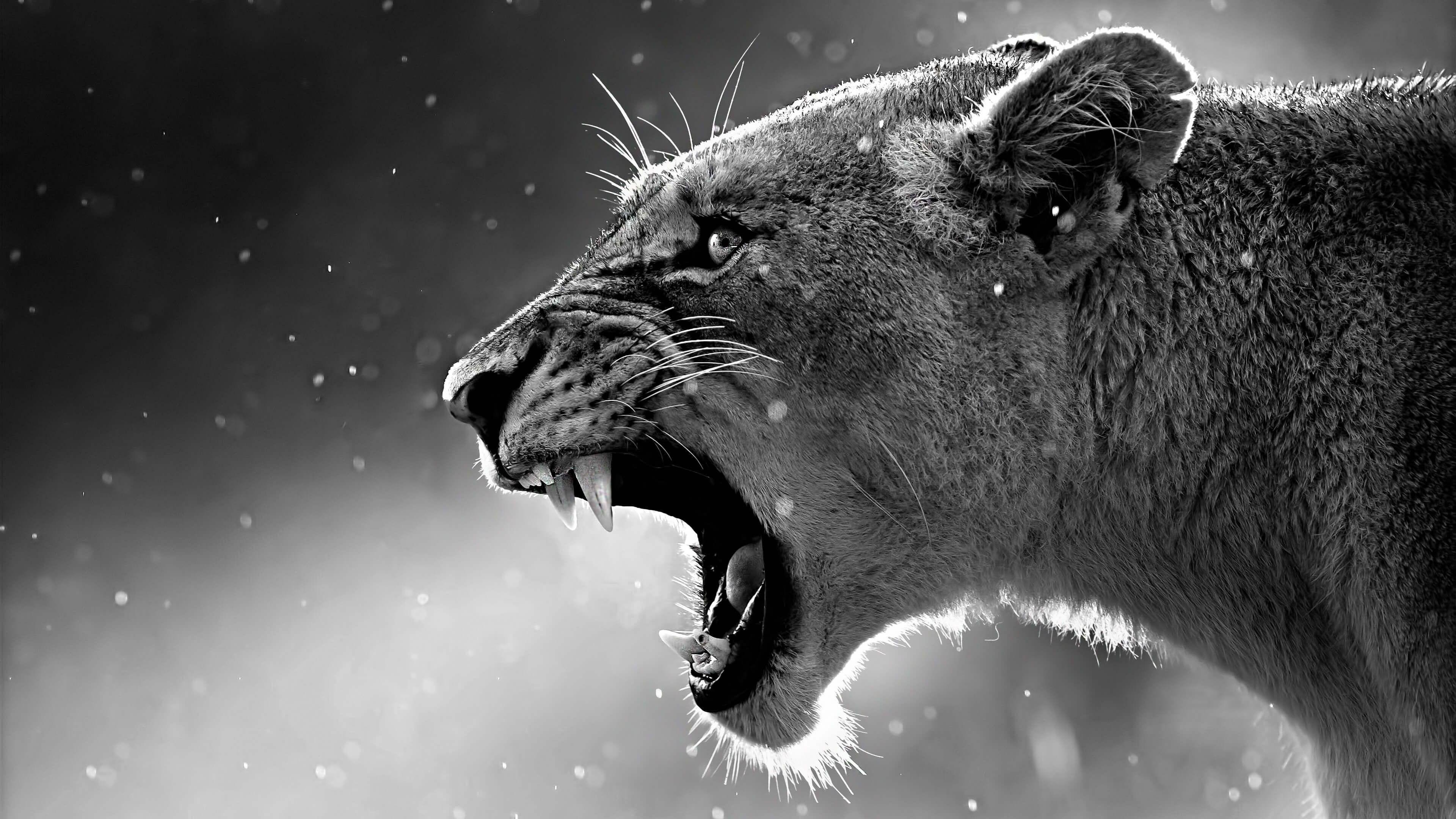 Free download Lion, Wild animals, Bugs, Birds Full HD Wallpaper ...
