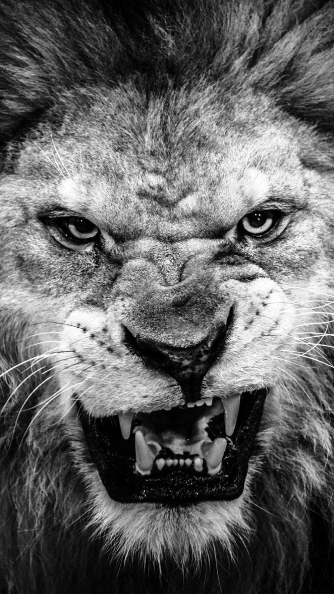 Lion wallpaper for iPhone users . | Wallpapers | Pinterest ...