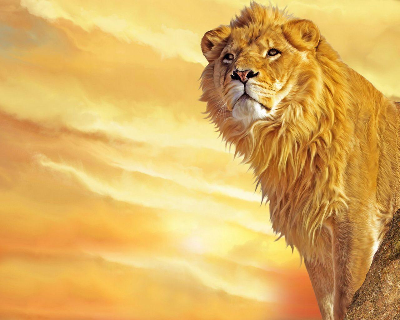 HD Lion Wallpaper - WallpaperSafari