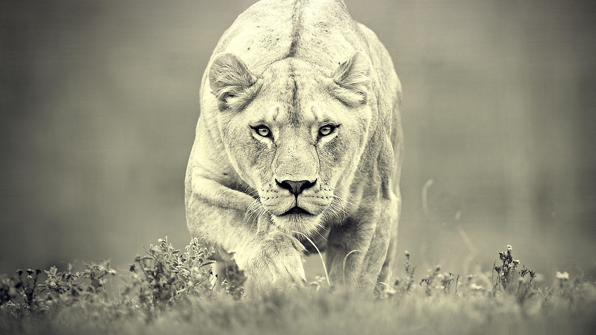 Free download Lion, Wild animals, Bugs, Birds 4K Ultra HD ...
