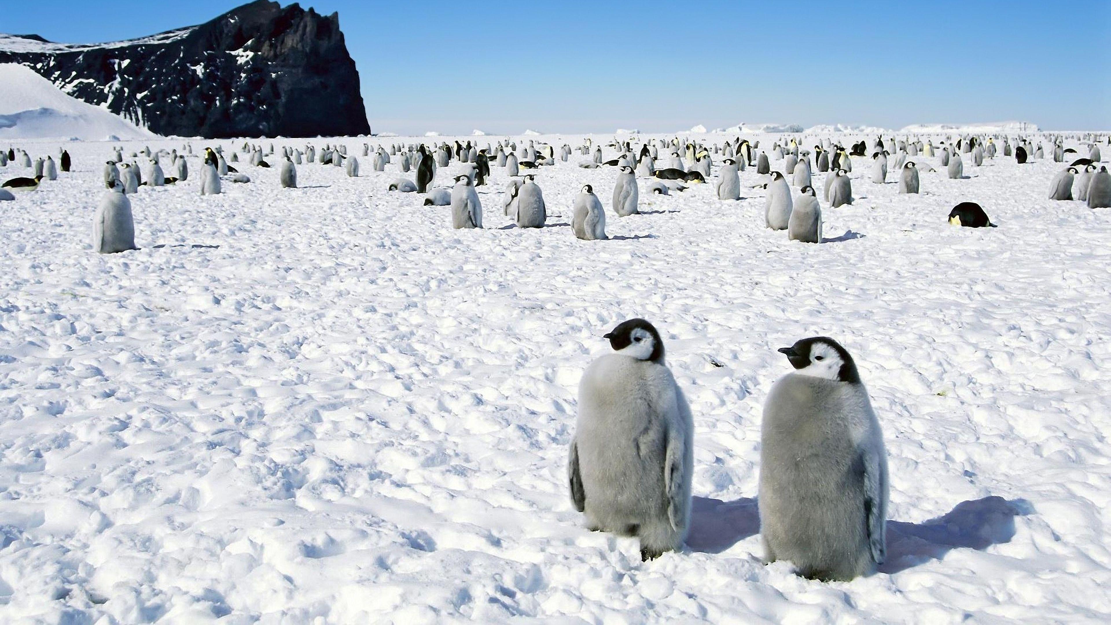 4K Ultra HD Antarctica Wallpapers HD, Desktop Backgrounds ...