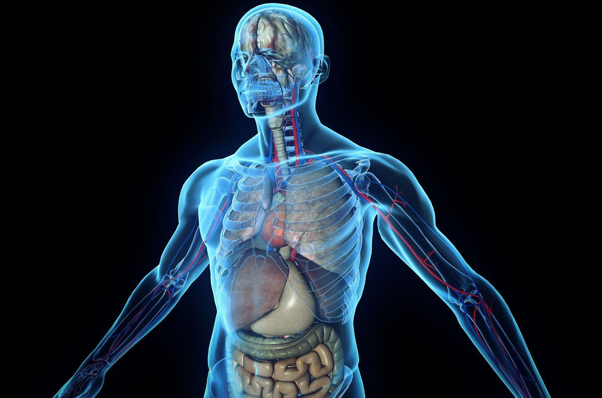 Human Body Wallpaper - Info