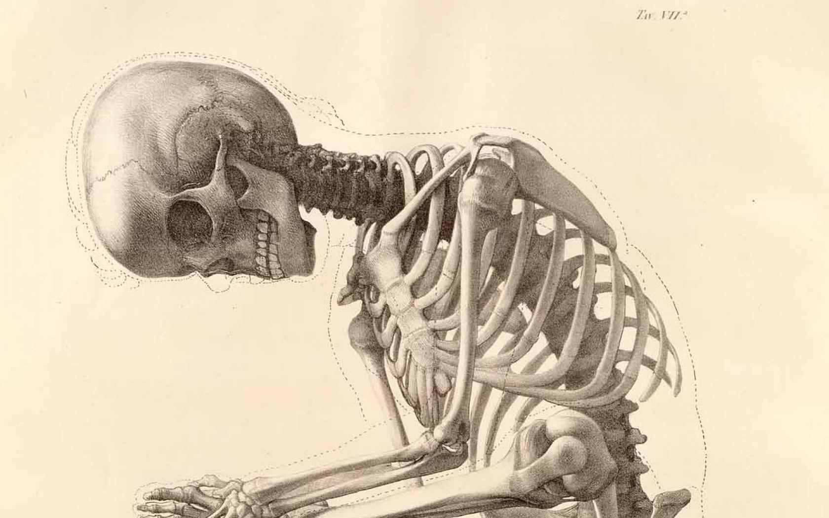 Human Anatomy Wallpaper - WallpaperSafari