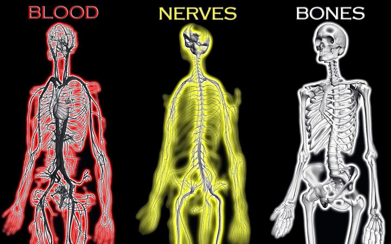 Human Body Hd Wallpaper