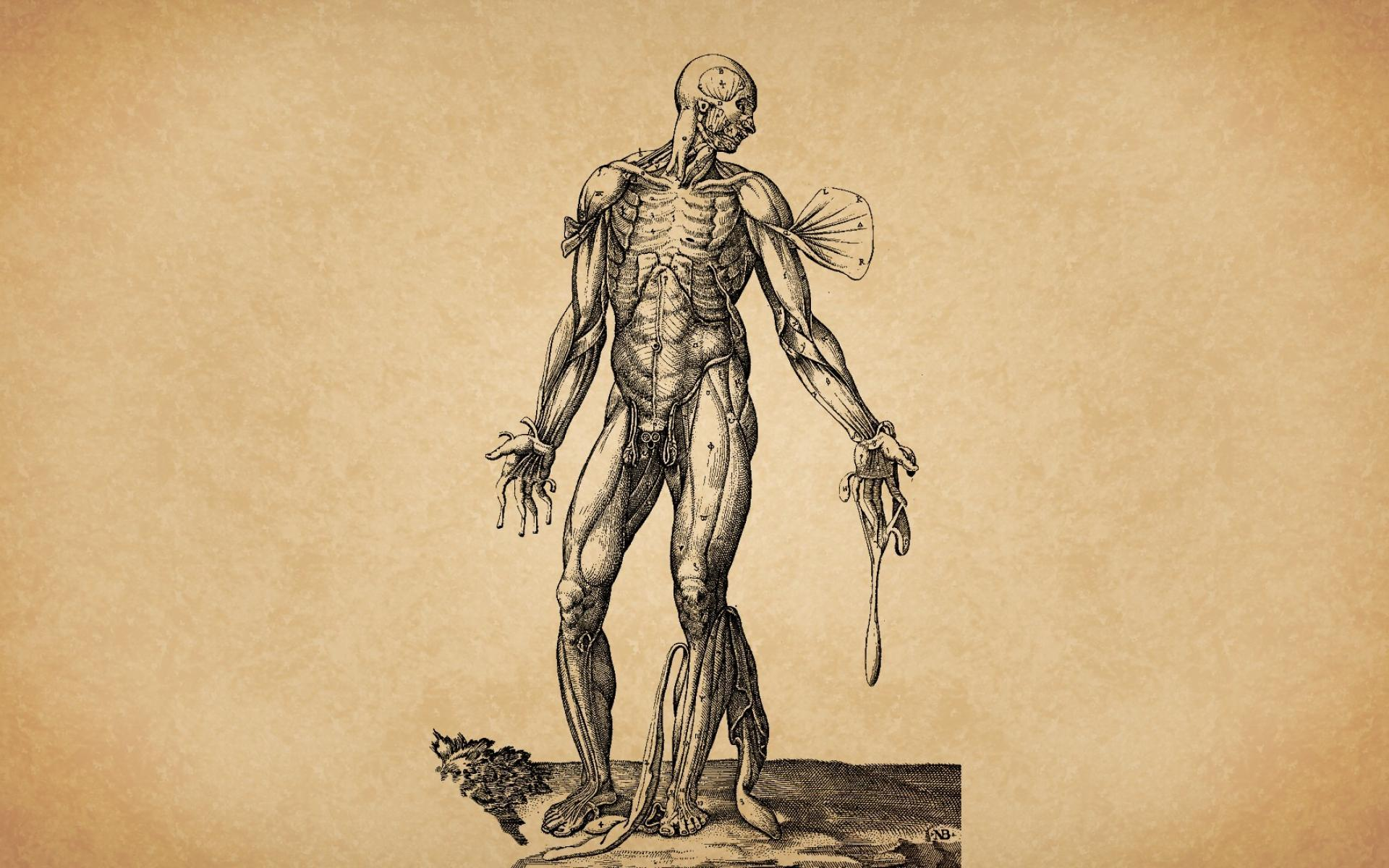 Human Body Wallpaper Art