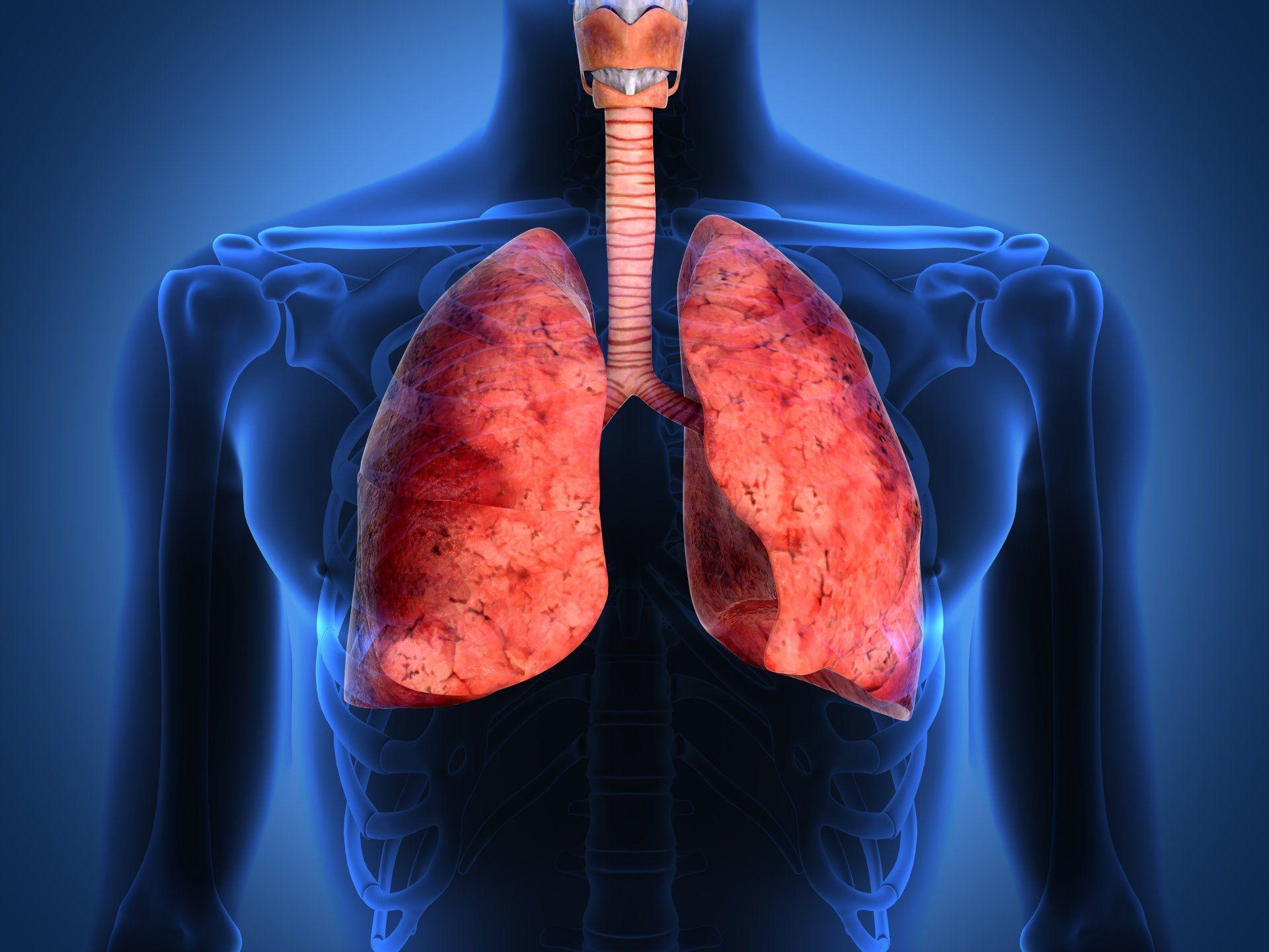 lungs human body respiratory tract HD wallpaper
