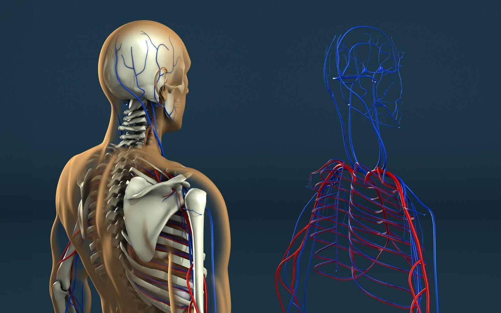 Human Anatomy Wallpaper