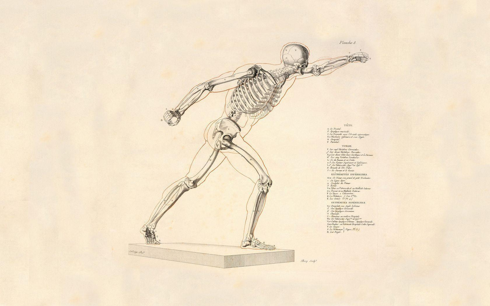 Anatomy Wallpapers Group (83+)