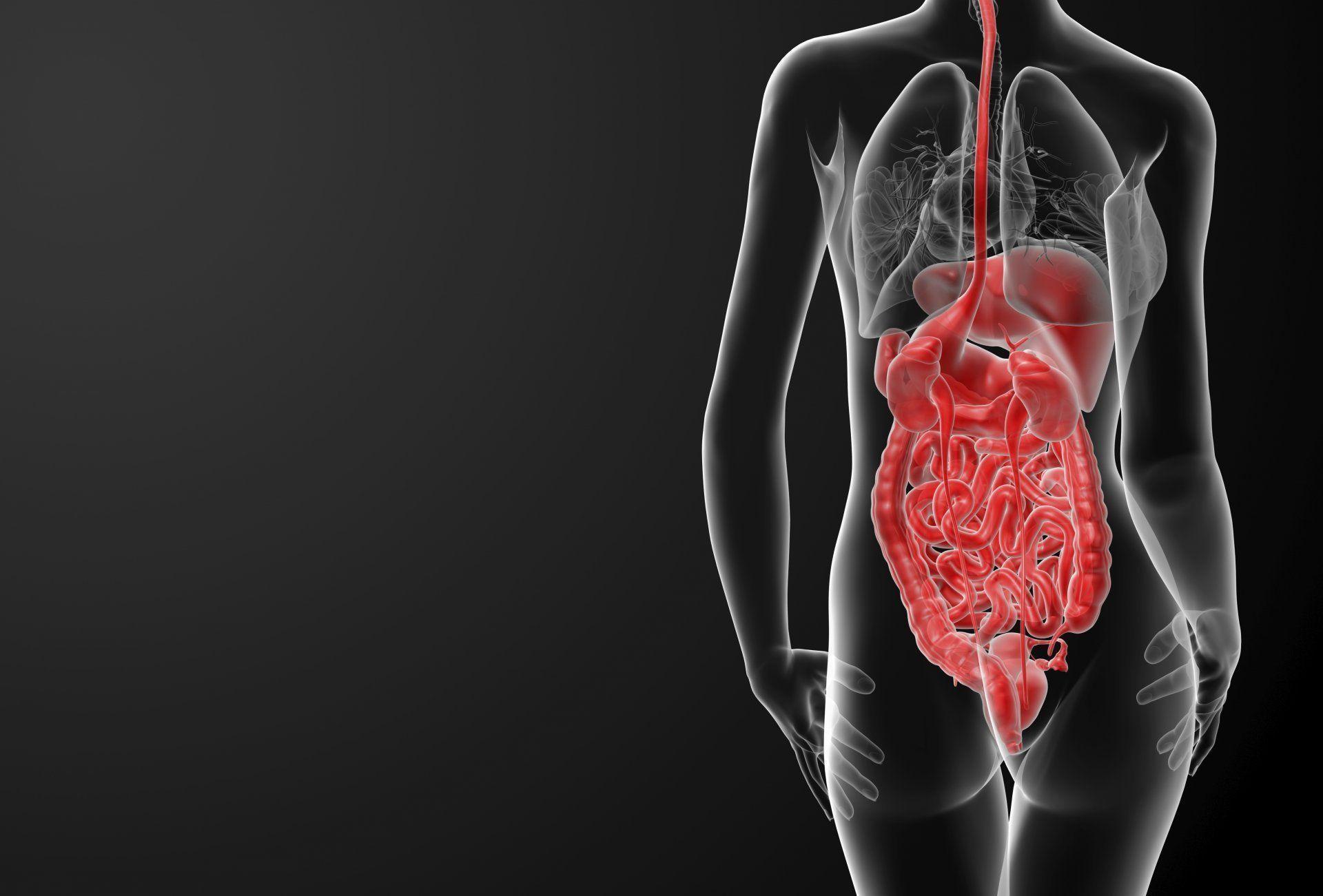 body woman human organs HD wallpaper