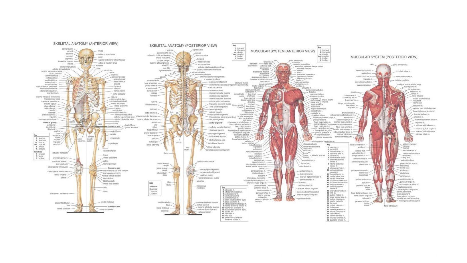 Postmortem Of Human Body Wallpapers   Wallpapers HD (High Difinition)