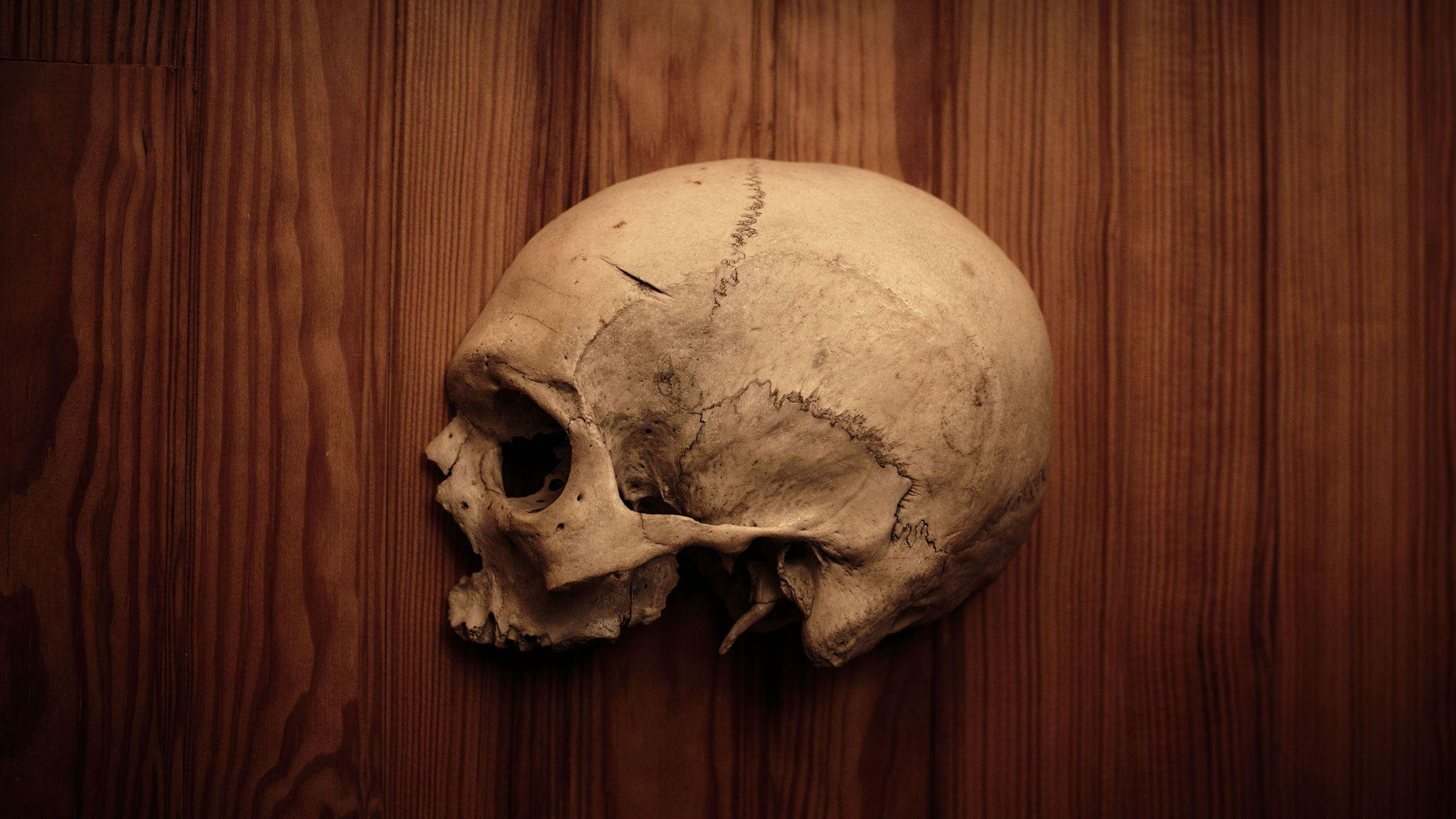skulls, wood, human, bones, human body, half :: Wallpapers