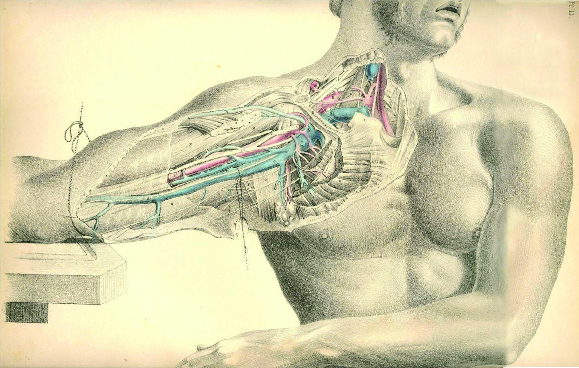 Human Body Test HD Wallpaper   HDWLP.COM