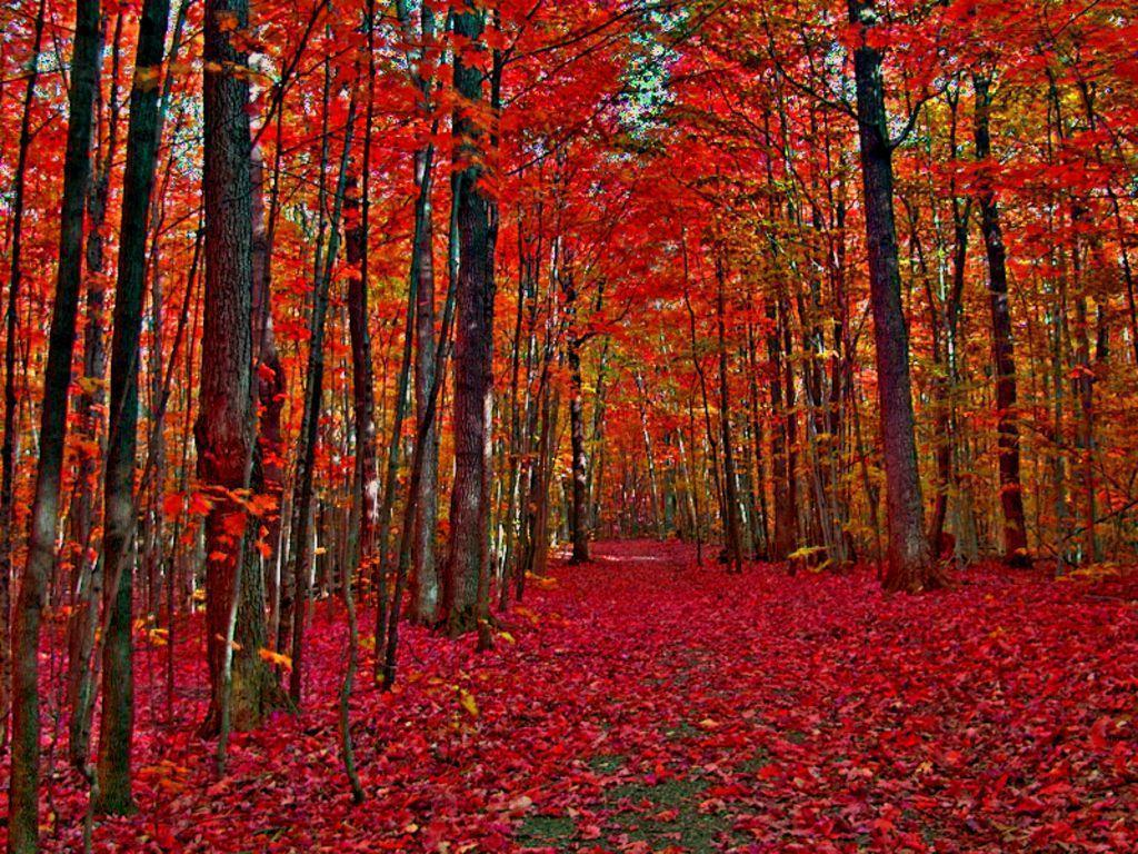 Autumn trees | Canada in Autumn Wallpaper - Download The Free ...