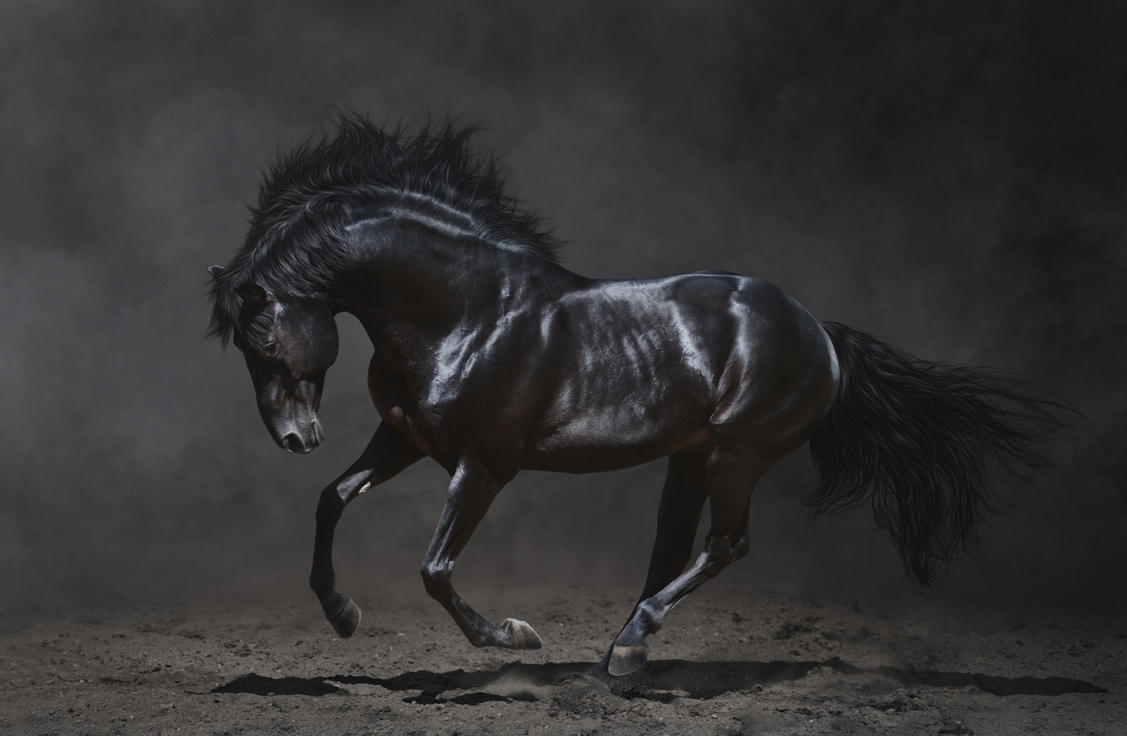 Black Horse Wallpapers - Wallpaper Cave - photo#3