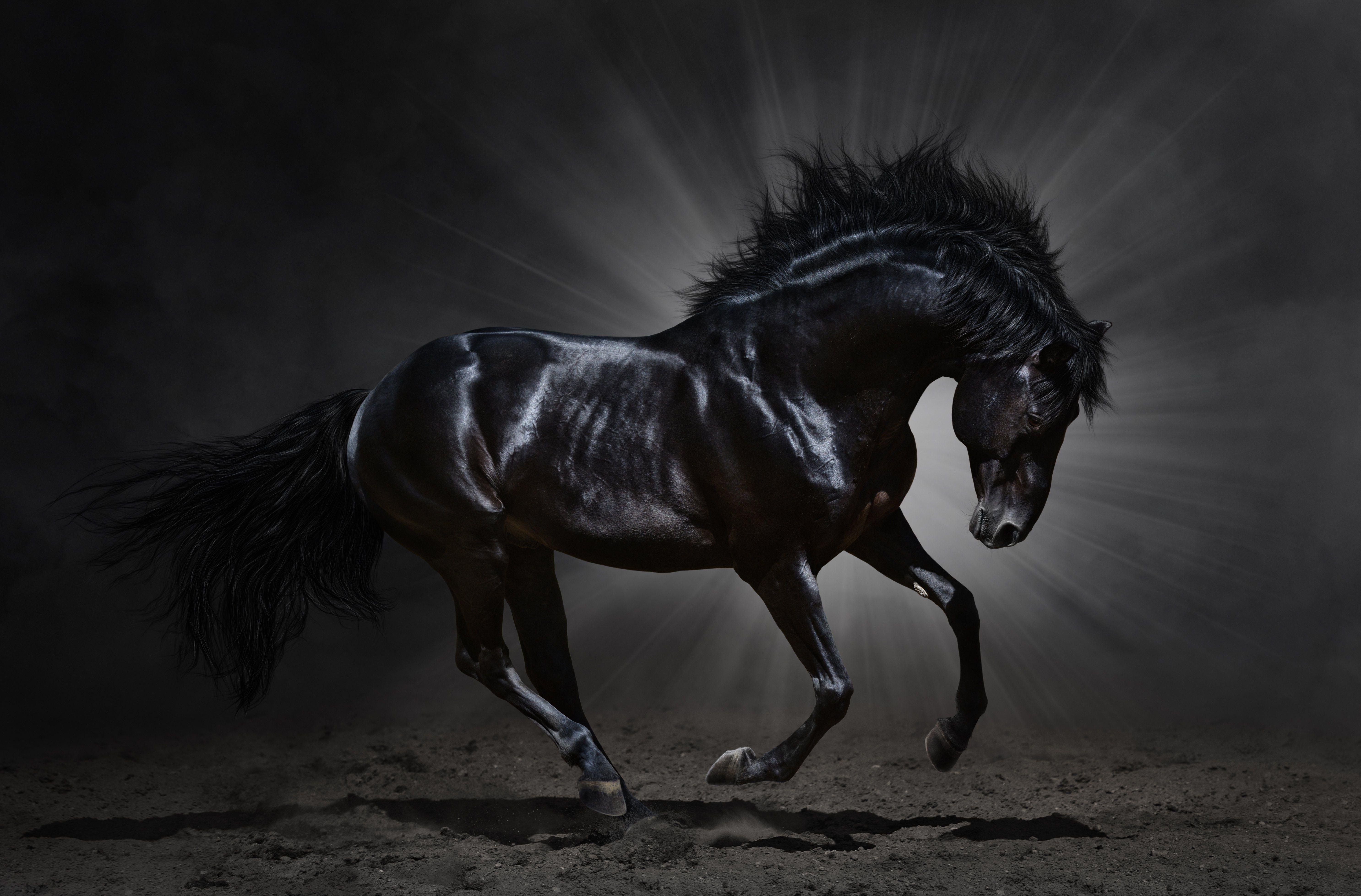 Black Horse Wallpapers - Wallpaper Cave Dark Horse