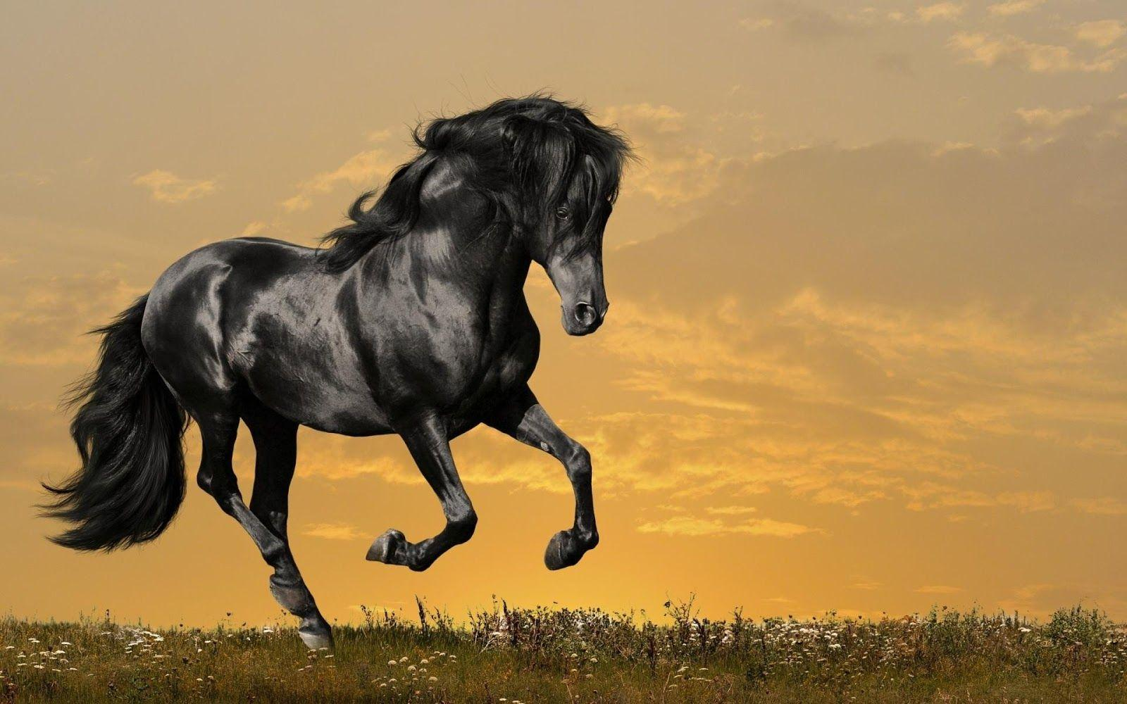 Black Horse Wallpapers - Wallpaper Cave - photo#44