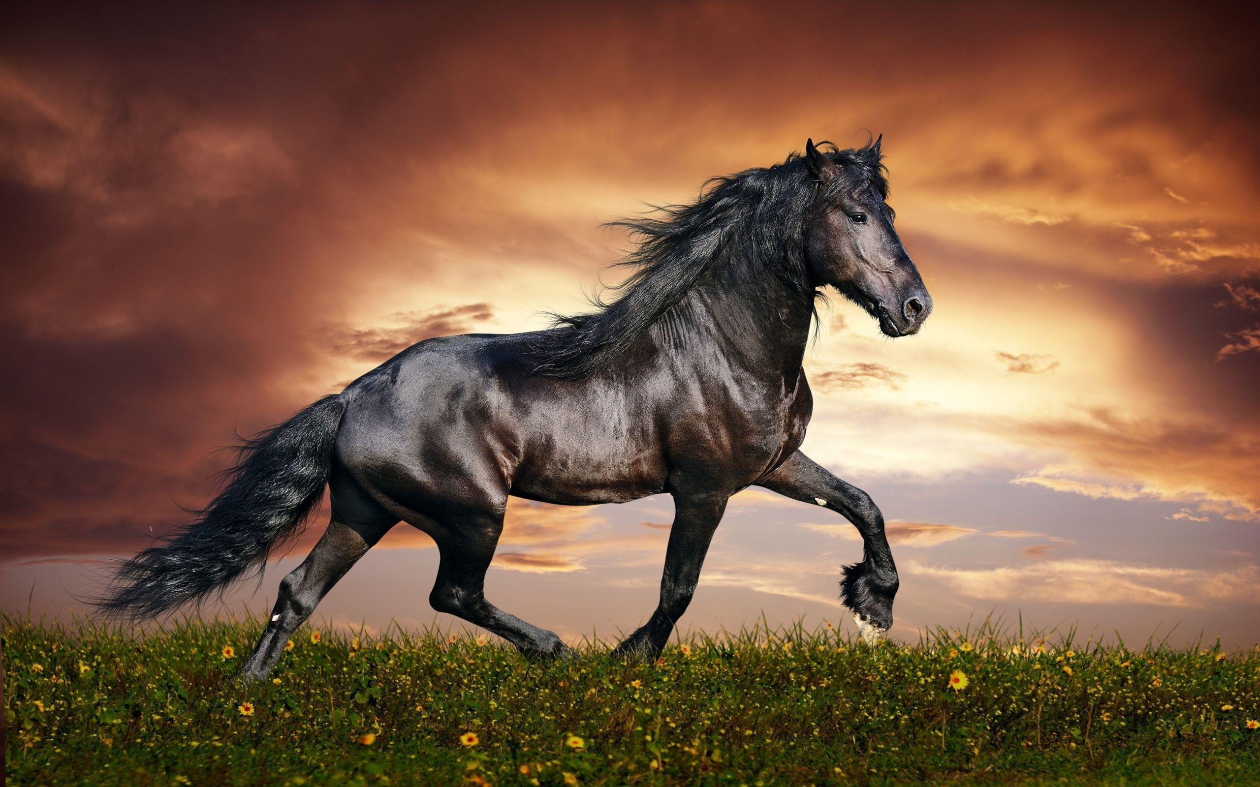 black horse wallpapers - wallpaper cave