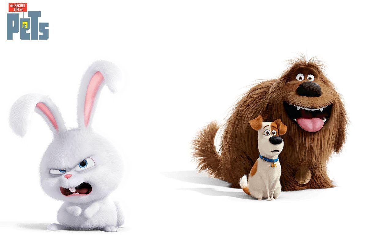обои на телефон заяц из тайная жизнь домашних животных ненавидят