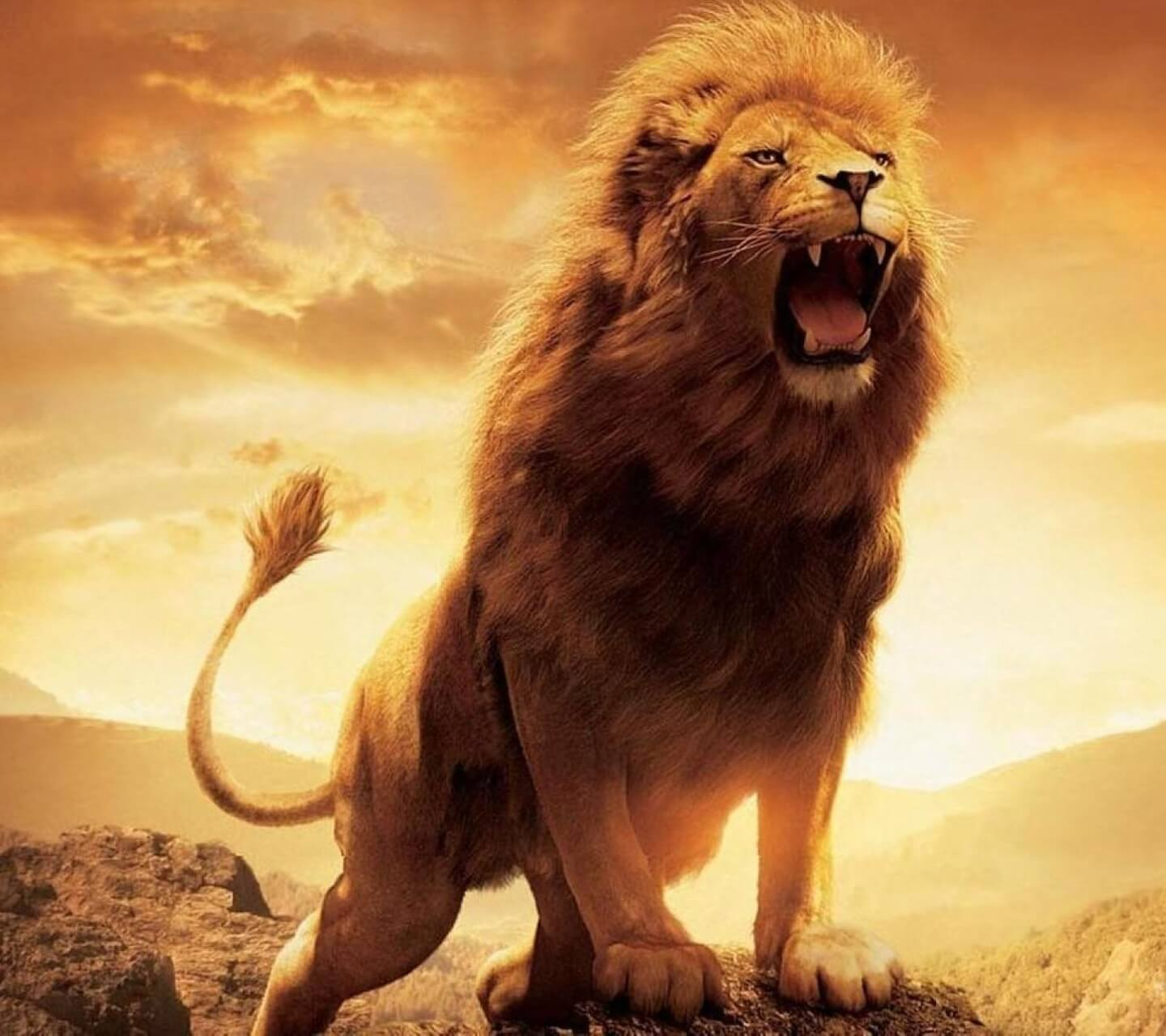 Lion Hd Wallpapers Wallpaper Cave Images, Photos, Reviews