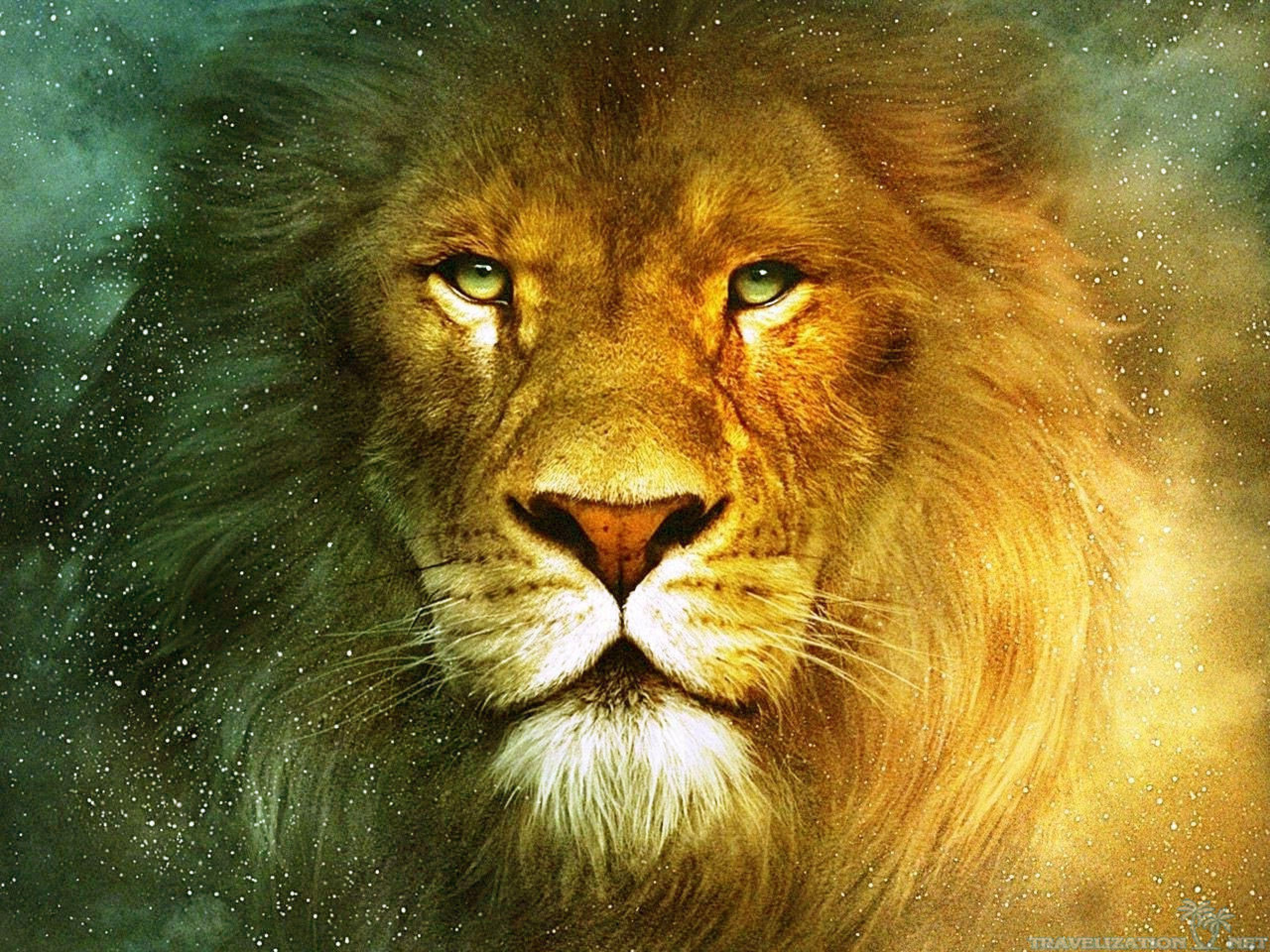 Lion Hd Wallpapers Wallpaper Cave